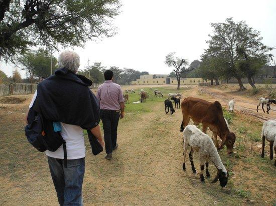 Samode Bagh : we walk to the Samode garden ..