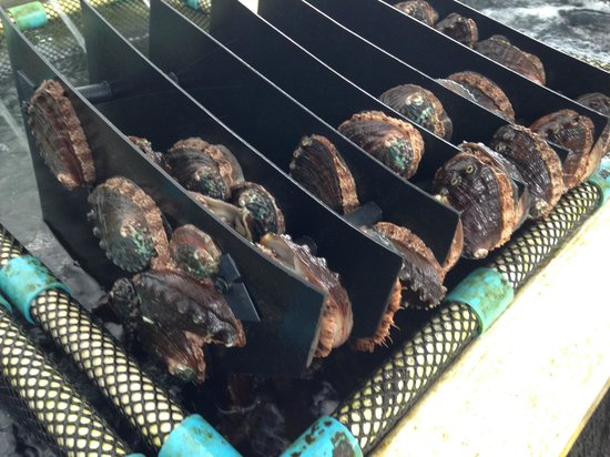 "Friends of NELHA : Abalone on ""gowing sheets"""