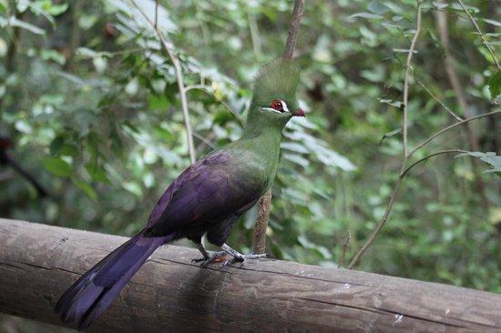 Birds of Eden: Loerie