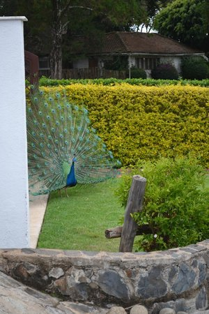 Fairmont Mount Kenya Safari Club: nice