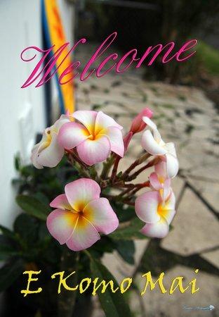 Shaka Shak: Plumeria Welcome