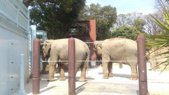 Ueno Zoo: ぞう