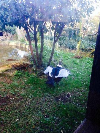 Welsh Mountain Zoo: condor