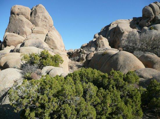 Jumbo Rocks Campground: Die Aussicht von unserer Campsite