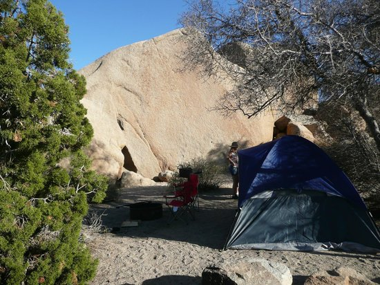 Jumbo Rocks Campground : Unsere Campsite