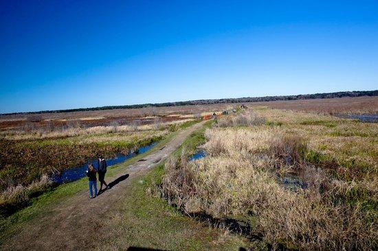 Paynes Prairie Preserve State Park: LaChua Trail