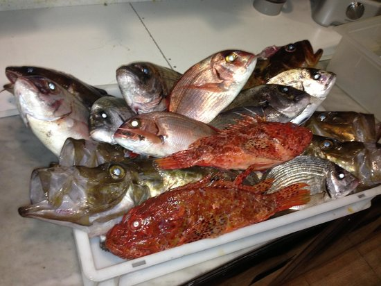 Vermell: Fresh selection of local fish.