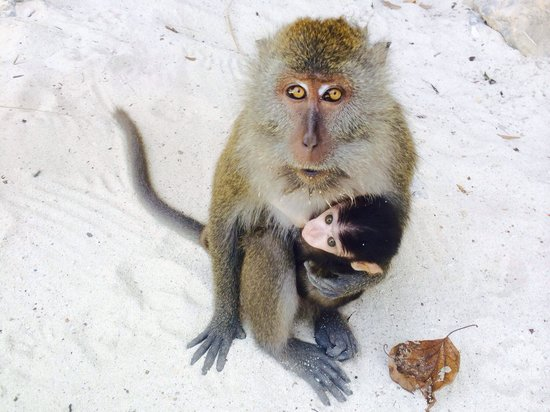 Phuket Sail Tours: Monkey island