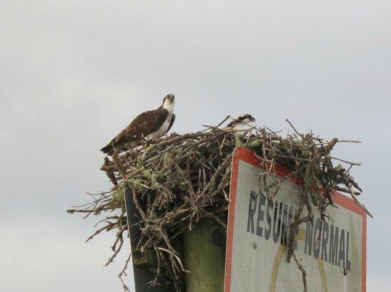 Marco Island Boat Tours: bird's nest (osprey?)