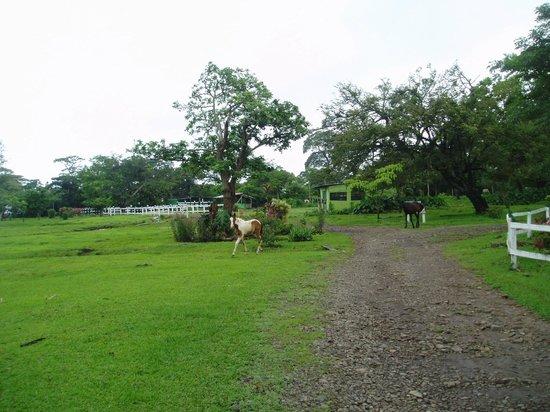 Rincon de la Vieja Lodge: zona común, exterior de las cabañas