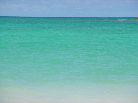 Kailua Beach Park: 心が洗われるような美しさ