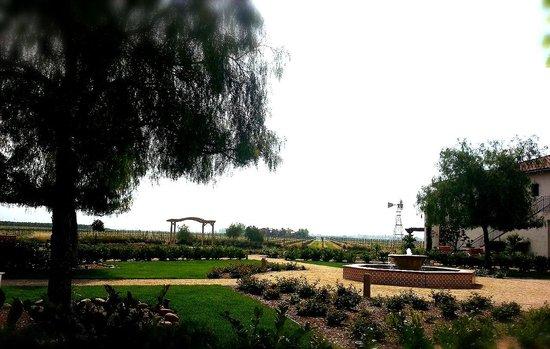 Ponte Vineyard Inn : View from hotel
