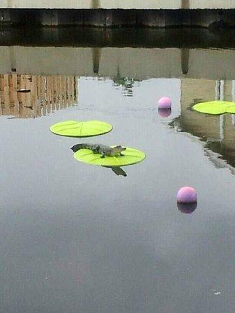 Bayou Terrebonne Waterlife Museum : C'est un vrai sur nénuphar en plastique
