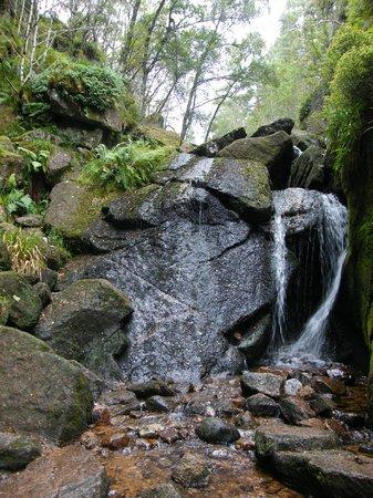 Muir of Dinnet National Nature Reserve: Burn O'Vat
