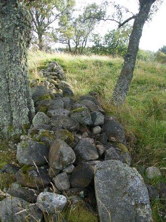 Muir of Dinnet National Nature Reserve: Scottish Stones