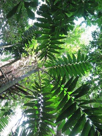 Maquenque Eco-Lodge: Rainforest of private preserve