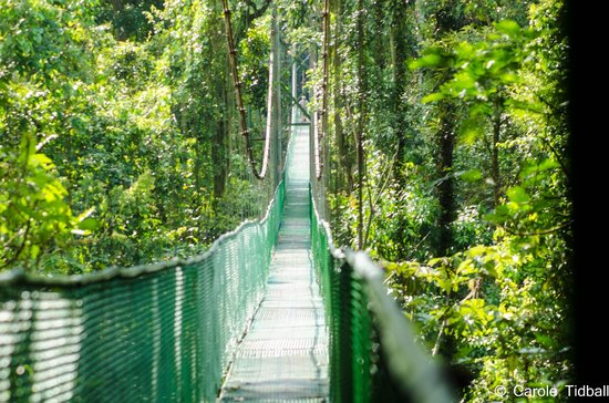 Tirimbina Biological Reserve : The suspension bridge.