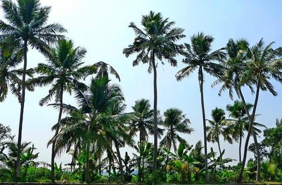 Xandari Riverscapes: Kochi Backwaters