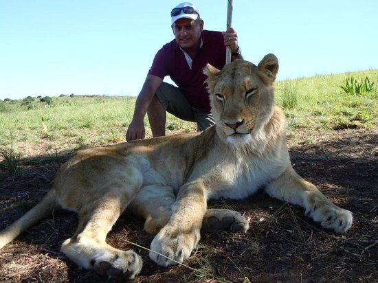 Botlierskop Private Game Reserve: Cat Walk - the highlight is get up close and personal with the lions
