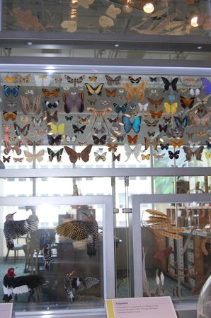 North Carolina Museum of Natural Sciences: Butterflies!