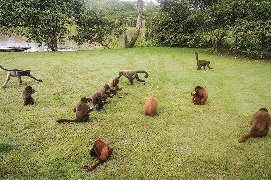 Iquitos Isla de Monos