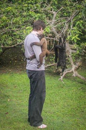La Isla De Los Monos: Choros y hupas negros