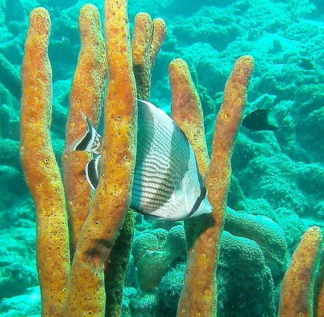 Divi Flamingo Beach Resort and Casino: Diving