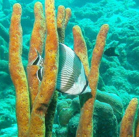 Divi Flamingo Beach Resort and Casino : Diving