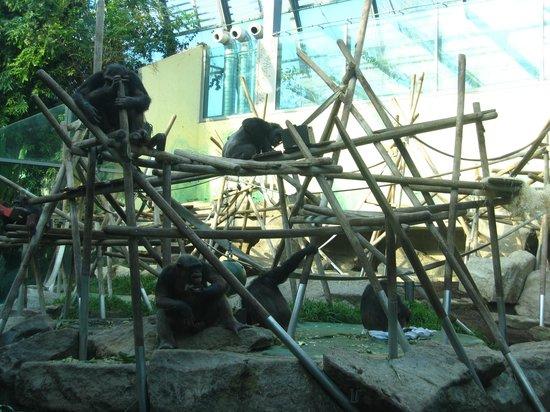 Tierpark Hellabrunn: the primates