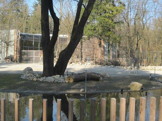 Tierpark Hellabrunn: an enclosure area