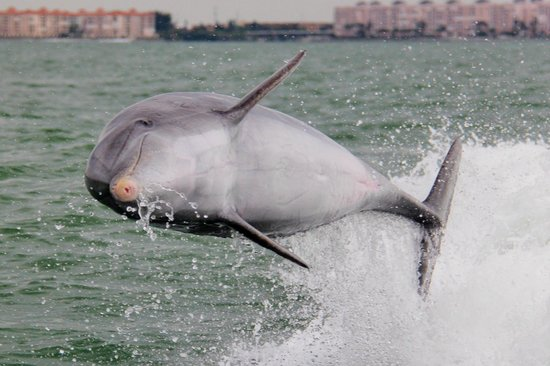 dolphins from the dolphin racer boat
