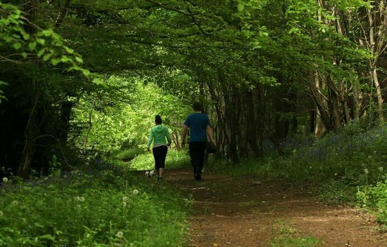 Castlecomer, Ирландия: Enjoying the peace and tranquility of the woodland trails