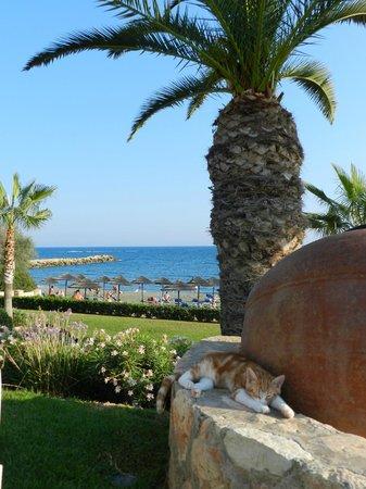 Mediterranean Beach Hotel: на пляже