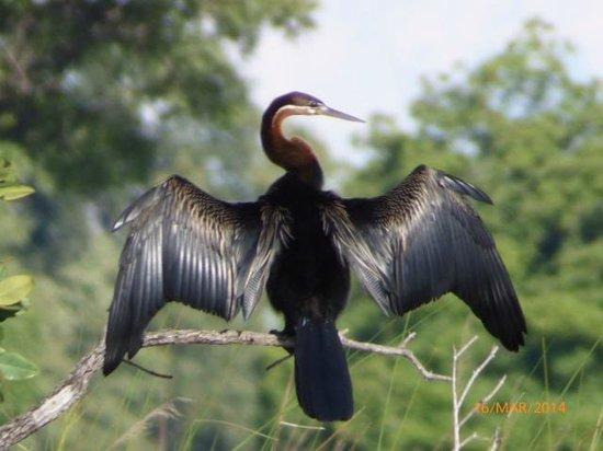 Shinde : snake bird