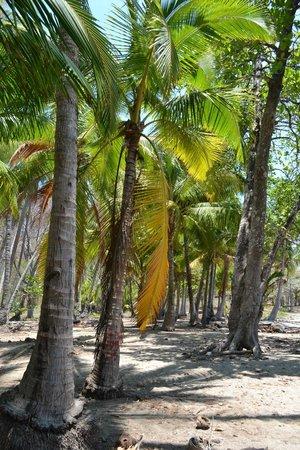 Vista Hermosa Boutique Bed & Breakfast : beach palms