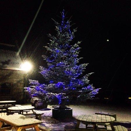 Househill Coffee Shop: Househill Courtyard Christmas Tree