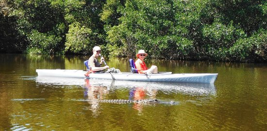 Tour the Glades - Private Wildlife Tours: Kayaking alongside a huge gator
