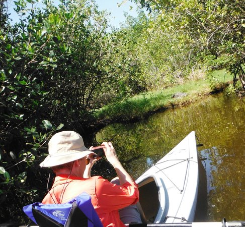 Tour the Glades - Private Wildlife Tours: Sneaking up on a sunning gator