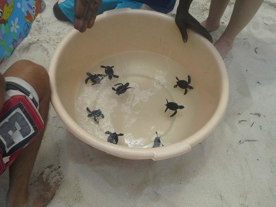 Amani Tiwi Beach Resort : Turtles in a bowl
