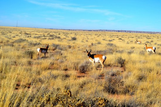 Painted Desert : New friends by the road