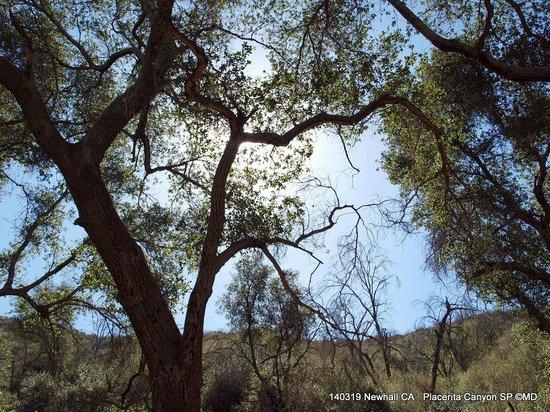 Placerita Canyon Nature Center : Canyon Trail