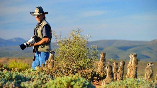 Meerkat Adventures: Dave y las suricatas