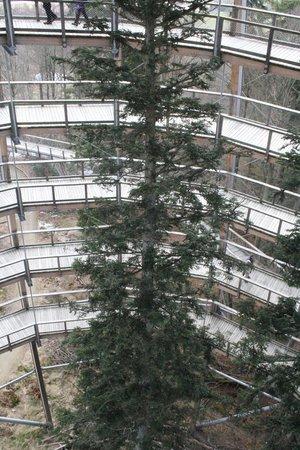 Baumwipfelpfad Bayerischer Wald: Was für ein Weihnachtsbaum .... :-)