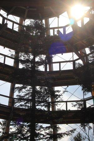 Baumwipfelpfad Bayerischer Wald: Mystisches Licht
