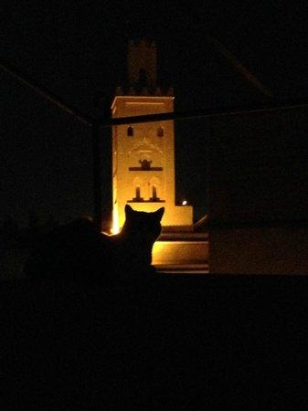 Le M de Marrakech : Un chat sur la terrasse