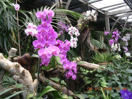 Loro Parque: Zachwycający świat orchidei
