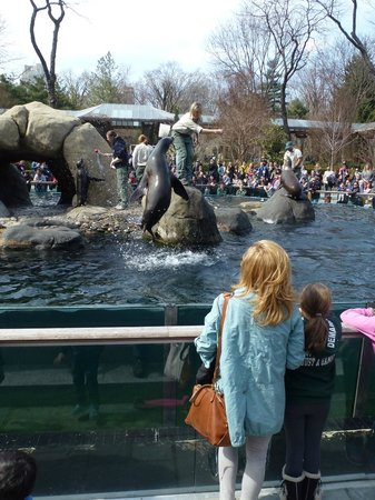 Central Park Zoo: Fun entertainment at the Sea Lion pool