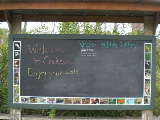 Corkscrew Swamp Sanctuary : Recent species seen posted on chalkboard (framed by species photos)