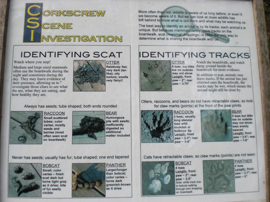 Corkscrew Swamp Sanctuary : Everything you wanted to know...and even more about scat!!