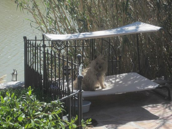 Riverbend Hot Springs: luna luxuriating in the cabana
